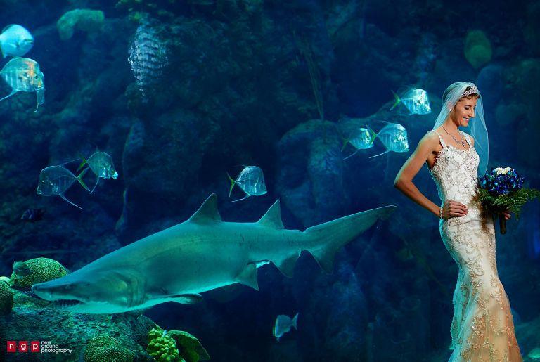 The Florida Aquarium Wedding   Lauren + Philip   Tampa ...